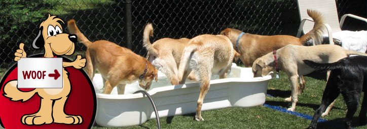Woof Day Care Amp Boarding Dog Boarding And Doggie Day Care