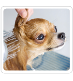 Dog Baths and Grooming in NJ